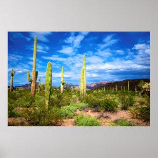 Paysage de cactus de désert, Arizona Poster