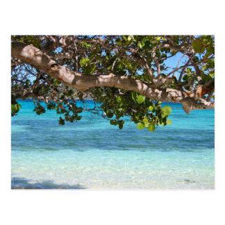 Paysage de plage des Barbade Carte Postale