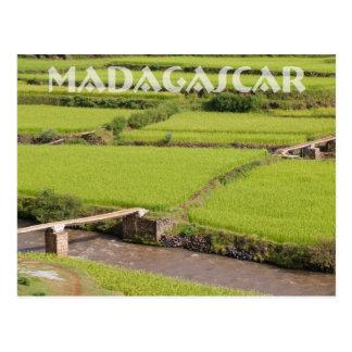 Paysage de rizières à Madagascar Cartes Postales