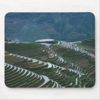 Paysage des terrasses de riz dans la montagne, 2 tapis de souris