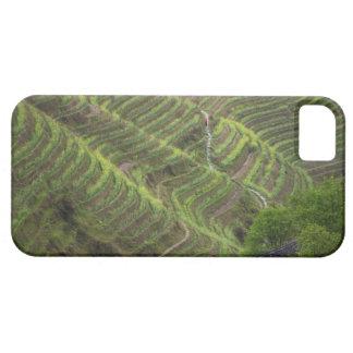 Paysage des terrasses de riz dans la montagne, coques Case-Mate iPhone 5