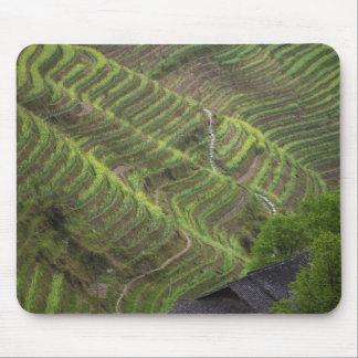 Paysage des terrasses de riz dans la montagne, tapis de souris
