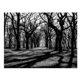Paysage noir et blanc dans le Central Park Carte Postale