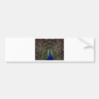 peacock-1868_640.jpg autocollant pour voiture