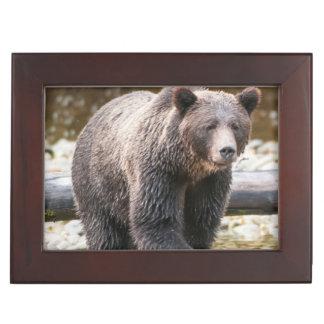 Pêche de Brown ou d'ours gris (Ursus Arctos) Boîtes À Souvenirs