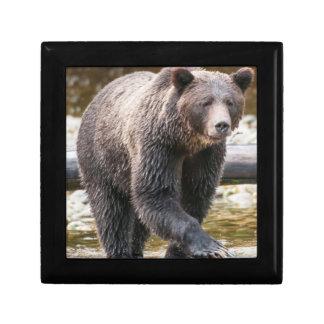 Pêche de Brown ou d'ours gris (Ursus Arctos) Petite Boîte À Bijoux Carrée