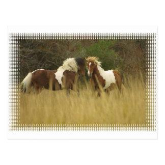 Peignez les poneys en carte postale de champ