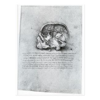 Peinture anatomique de crâne carte postale