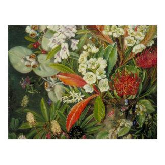 Peinture botanique du nord de Marianne Carte Postale