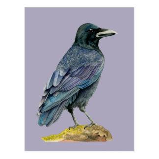 Peinture d'aquarelle de corneille carte postale