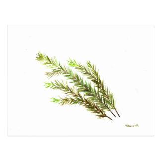 Peinture pour aquarelle d'art de cuisine d'herbe carte postale