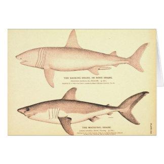 Pèlerin et requin de maquereau cartes