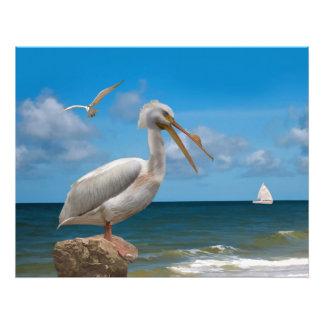 Pélican blanc sur une roche photographie