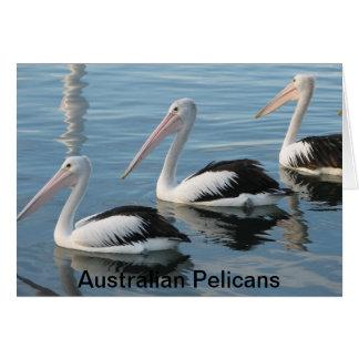 Pélicans australiens cartes