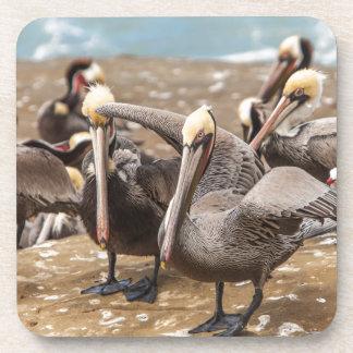 Pélicans de Brown à terre. Crique de La Jolla, San Dessous-de-verre
