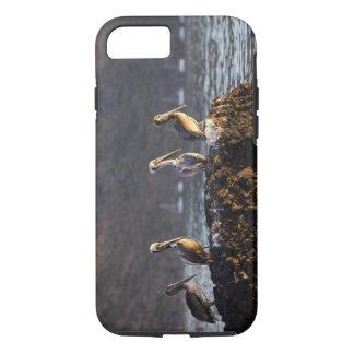 Pélicans de Brown sur la roche dans Puerto Coque iPhone 7