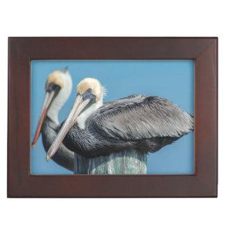 Pélicans roosting sur le pylône boîtes à souvenirs