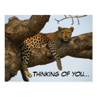 Pensée à vous (léopard dans un arbre) carte postale