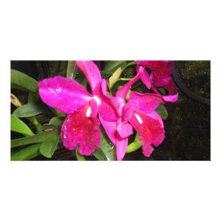 Pensée à vous orchidées carte avec photo