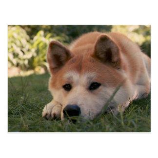 Pensées profondes de chien d'Akita Inu Carte Postale