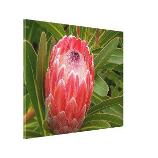 Perfection de Protea d'impression de toile Toiles