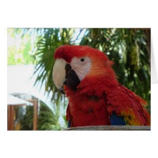 Perroquet assez rouge carte de vœux
