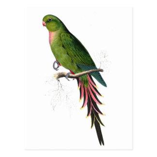 Perroquet Cartes Postales