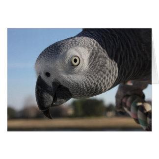 Perroquet curieux de gris africain du Congo Carte De Vœux