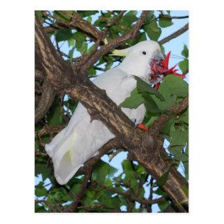 Perroquet de cacatoès blanc sauvage carte postale