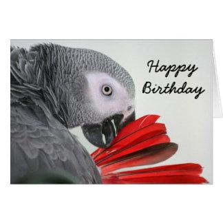 Perroquet de gris de gris africain du Congo de Carte De Vœux