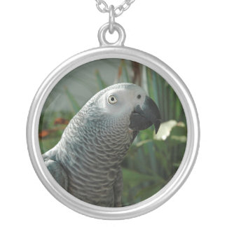 Perroquet fini de gris africain pendentif rond