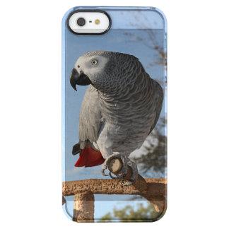 Perroquet renversant de gris africain coque iPhone clear SE/5/5s