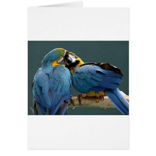 perroquets affectueux carte de vœux