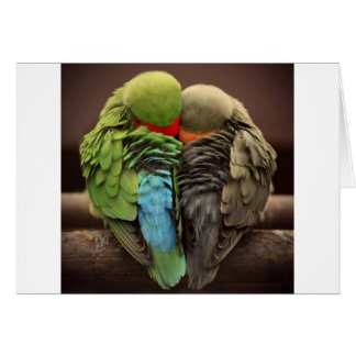 perroquets carte de vœux