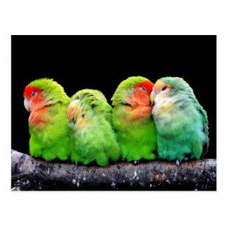 Perroquets colorés mignons se reposant sur une carte postale