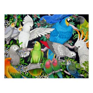 Perroquets d'animal familier de la carte postale