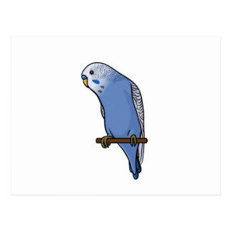Perruche bleue cartes postales