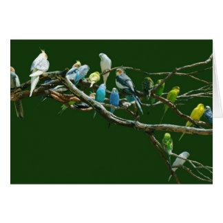 Perruches des Cockatiels N Carte De Vœux
