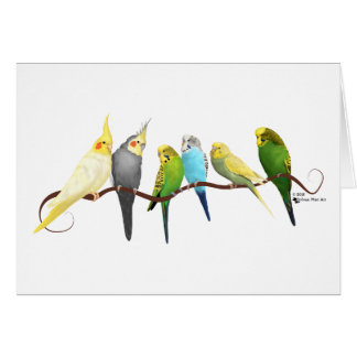 Perruches et Cockatiels ! Carte De Vœux