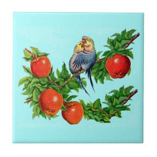 perruches ou inséparables ou amants d'oiseau petit carreau carré