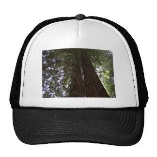 Perspective des séquoias casquette