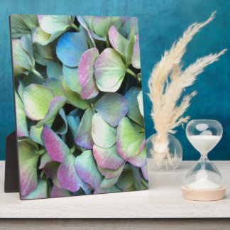 Pétales multicolores d'HORTENSIA --- Photos Sur Plaques