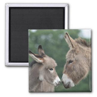 Petit âne magnet carré