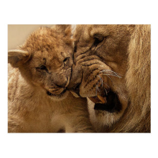 Petit animal de lion avec le papa carte postale