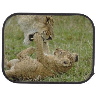 Petit animal de lion jouant avec le lion femelle, tapis de sol