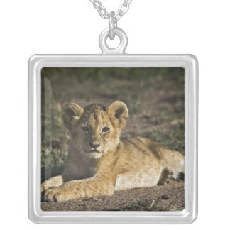 Petit animal de lion, Panthera Lion, se situant Collier