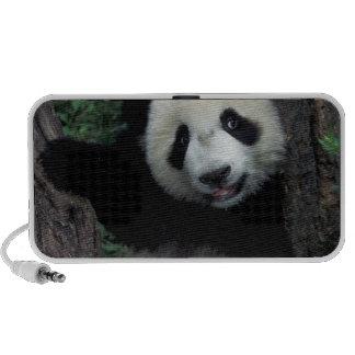 Petit animal de panda avec l'arbre, Wolong, provin Haut-parleurs Portables
