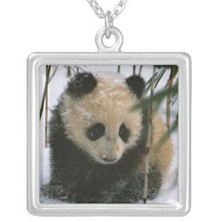 Petit animal de panda sur la neige, Wolong, Collier
