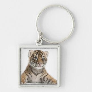 Petit animal de tigre de Sumatran Porte-clé Carré Argenté