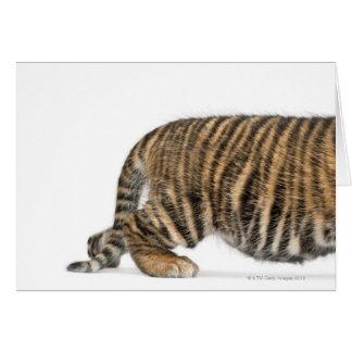 Petit animal de tigre de Sumatran - sumatrae du Carte De Vœux